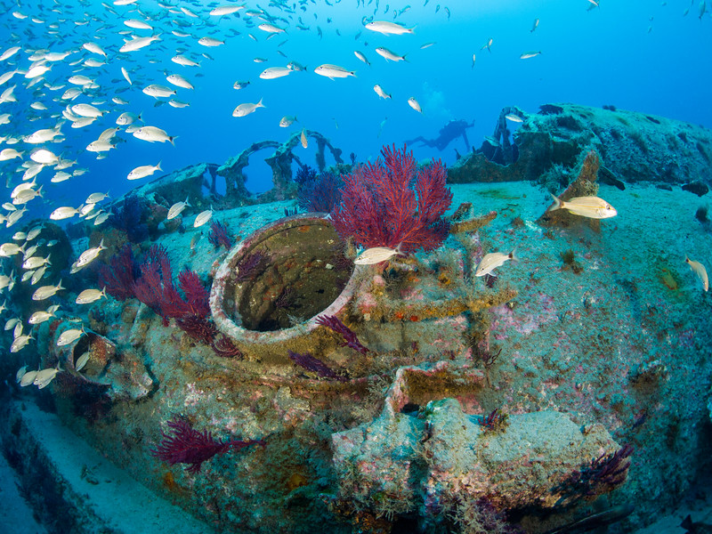 Diver and a school of tomtate at the wreck of U-352.