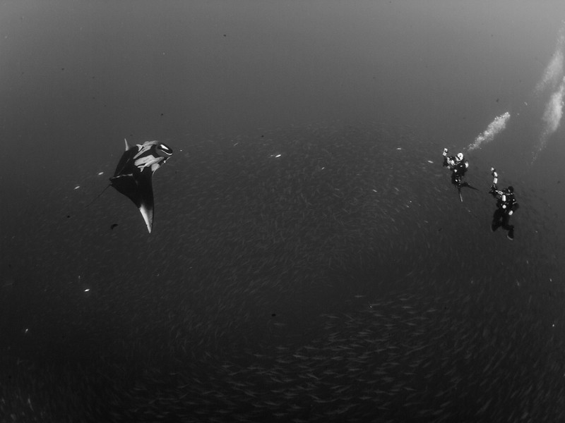 Dive buddies Drew and Adrianna share a baitball with an oceanic manta at Roca Partida.