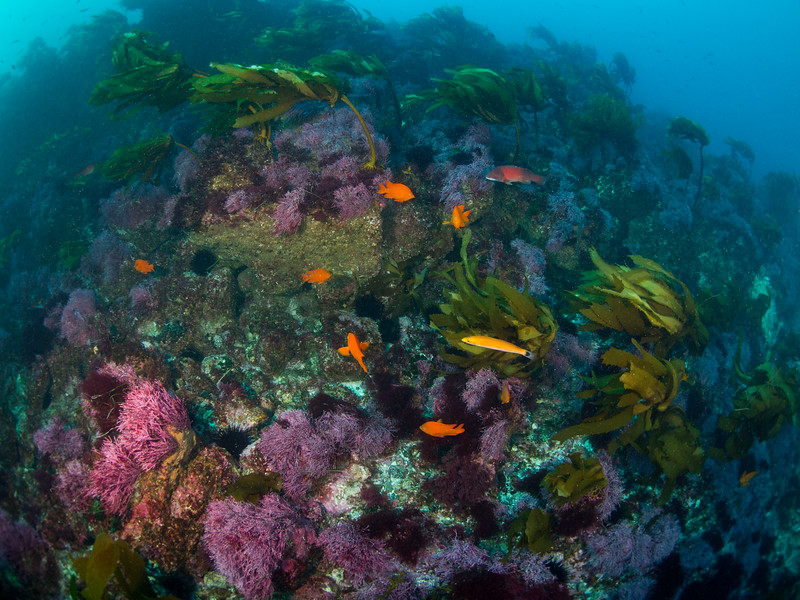 Reefscape at Cortes Bank.