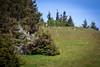 Cascade Head, Oregon Coast, Nature Conservancy Trail