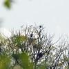 Heron Rookrie Caledon State Park Virginia