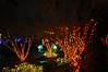 Posted 12.15.2010 Lewis Ginter Botantical Gardens, Richmond VA