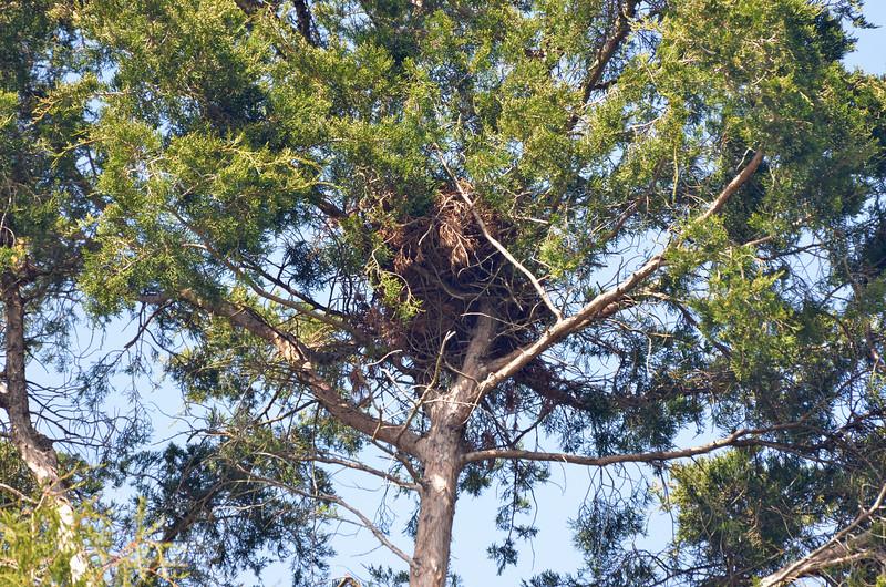 Osprey Nest in Picnic Ground