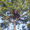 Osprey Nest in Picnic Ground
