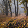 Autumn in Khancoban