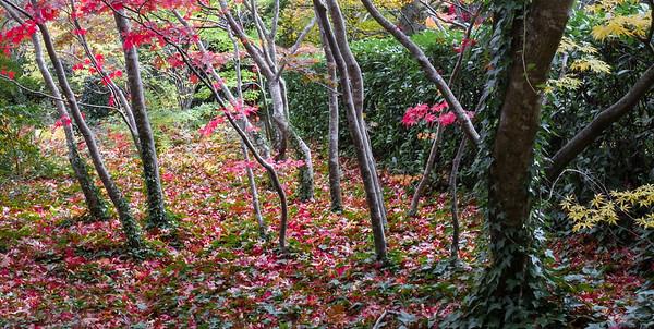 Bebeah Gardens