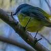 At Tillgerry Nature Reserve