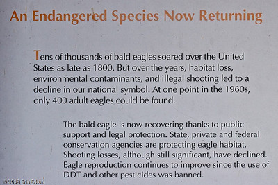 The information board at the observation point provides some insight into eagles.  The information is a little outdated - in 2007, the bald eagle was removed from the endangered species list.