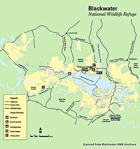 Blackwater National Wildlife Refuge Map (scanned from brochure).