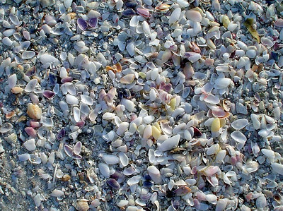On parts of the shore, there are tiny seashells galore.