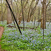 Bull Run Regional Park - April 12: The Bluebell Trail is named for the fields and fields of Virginia bluebells that line either side of the path.