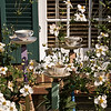 Japanese Anemone<br /> An interesting display of cups and saucers; I wonder if they're intended as bird baths?