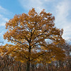 We found one of the few trees on Skyline Drive that has some color at the Moormans River Overlook.