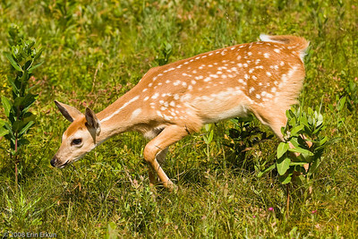 Nice, close view of the fawn.