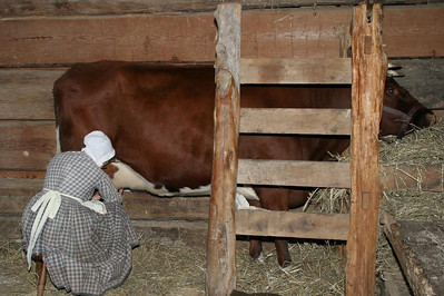 To ready the cow for milking, the milkmaid first cleans the teats with cloth and then she uses udder cream to soften her hands.