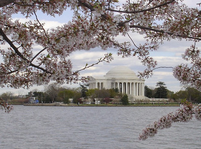 View of the Jefferson Memorial through the cherry blossoms at the FDR Memorial.