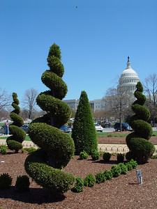 April 9, 2005 Topiary trees and the US Capitol from the grounds of the US Botanic Garden