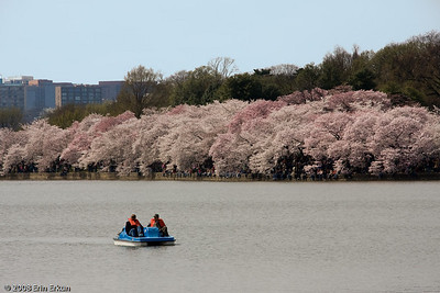 One way of enjoying the blossoming cherry trees is to go out on a paddle boat.