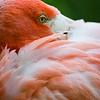 Flamingo<br /> 19 May 2012