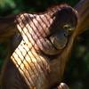Orangutan (on the overhead O-Line) - Batang<br /> 19 May 2012