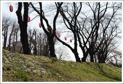 This is the dike that separates the aqueduct from the Tama river.  The lanterns were up for the cherry blossom festival, even though the trees were not blooming yet.