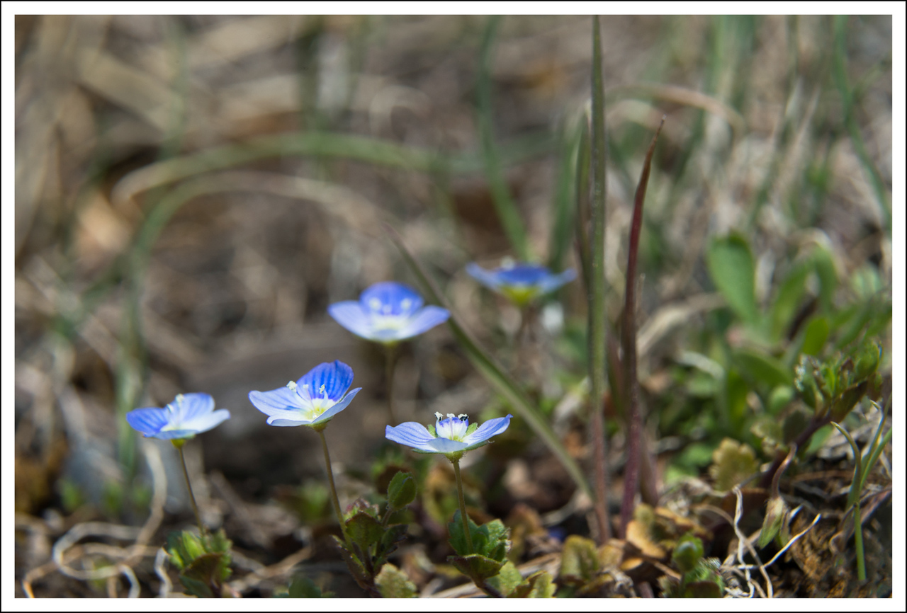 "These tiny (1/2"") wild flowers were everywhere."
