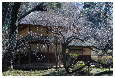 A tea house among the plum trees.  I moved most of the building images to the architecture gallery, but left this one here.