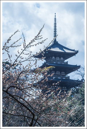 This view of the 3 storied pagoda is well photographed, and is even on the front of their pamphlet.  Unfortunately the plum blossoms were past their peak.