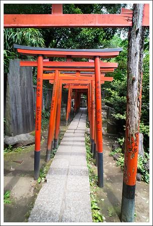 Old torii gates