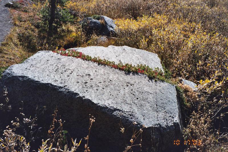 Plant life in a split rock