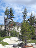 The forest in this area seemed relatively healthy, compared to other parts of the Sierra