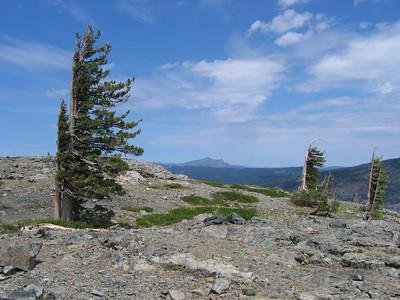 Sierra Butte, wind-sculpted trees