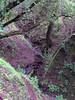 Tree-shrouded canyon