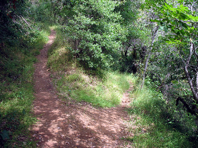 Looking down at the river spur trail (right) and the continuation of the American Canyon Creek trail. The latter probably goes down to the river a bit further along. Both trails have a lot of poison oak encroaching from both sides.