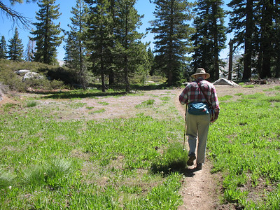 Larry crosses a meadow. There were lots of small purple flowers in this area.