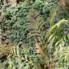 Ferns, other plants.