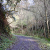Inviting trail.