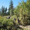 Passing thru willows.
