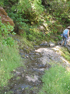 Water flowing across trail.