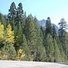 Aspen trees near Kirkwood, Thunder Mountain in background.