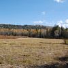 Meadow near Red Lake.