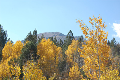 Carson Pass Fall Color 2011