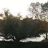 Sacramento River riparian panorama.