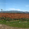 Sonoma Valley panorama. Why not.
