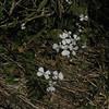 Pretty white flowers.