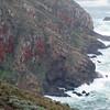 Lichen-covered rocks.