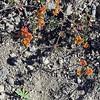 Beautiful drought-tolerant plant.