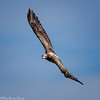 eagle flight 2_5730 fb