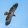 eagle flight 4 5751 fb
