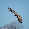 eagle flight 6 5650 fb